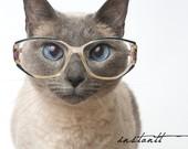 cat in glasses2