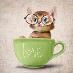 SparaFuori Kitten